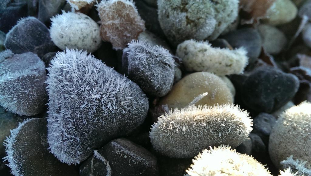 fuzzy frost
