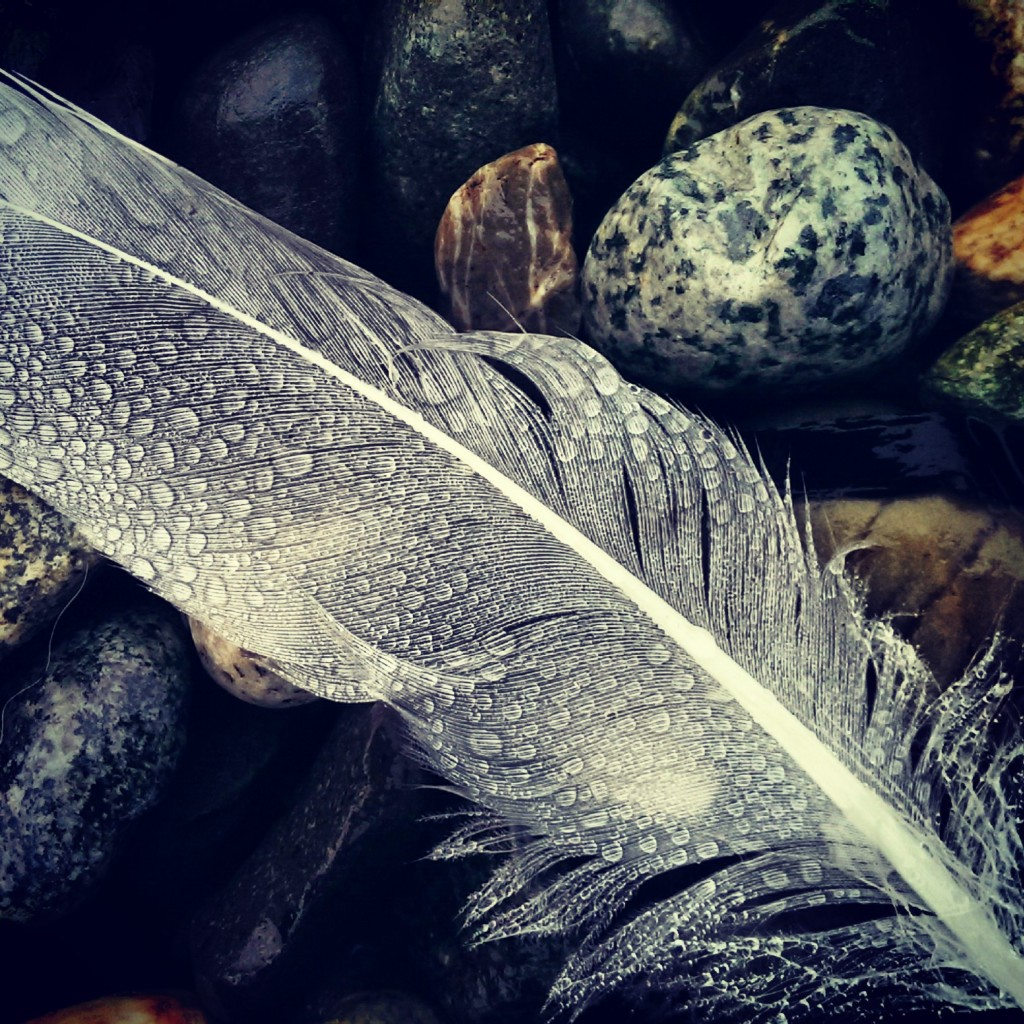Feather in the Fog
