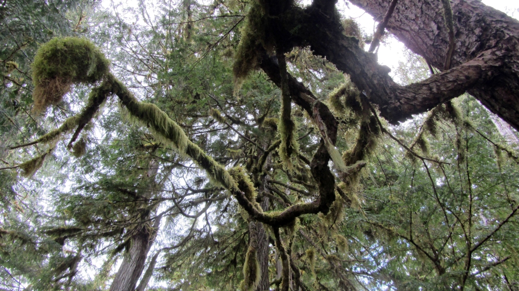 Mossy canopy